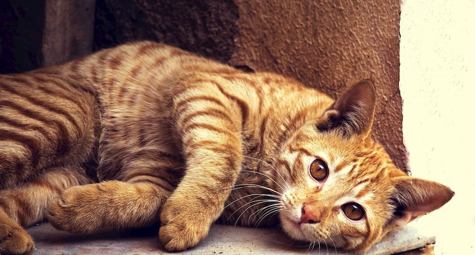 18-segni-che-il-tuo-gatto-è-malato