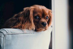 Come-mantenere-la-tua-casa-pulita-con-gli-animali-domestici
