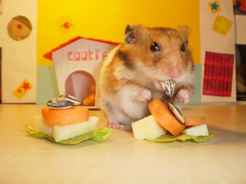Cosa-mangiano-i-criceti