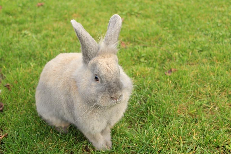 Guida-alla-cura-del-coniglio-da-compagnia