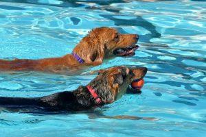 Il-cloro-è-dannoso-per-i-cani