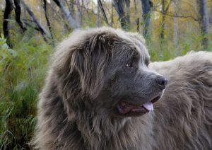 cane-terranova