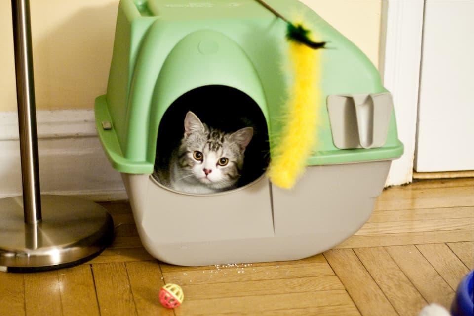 gatto-nella-lettiera